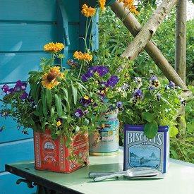 Container Gardening photos