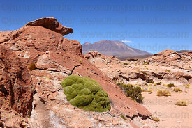 Eroded lava rock formations, yareta plant (Azorella compacta) and Cerro Chascos volcano, North Lipez region , Bolivia