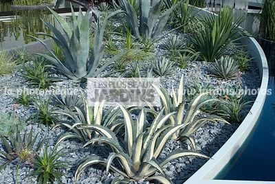 La phototh que les plus beaux jardins philip nash le for Yucca exterieur rustique