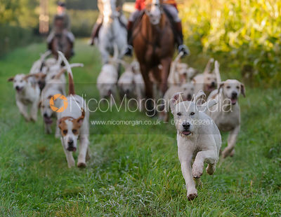The Cottesmore Hunt at Cow Close Farm 25/9 photos