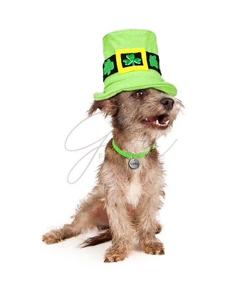St Patricks Day Lucky Dog