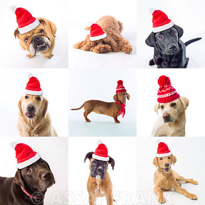 Collage of dogs with santa hats