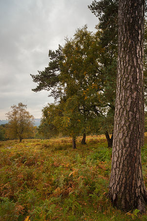 Trees on the Longshaw Estate