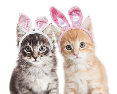 Two kittens wearing Easter bunny ears