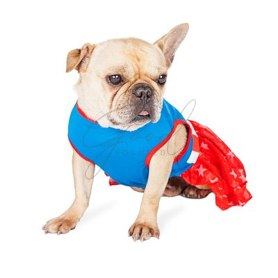 Cute French Bulldog Superhero