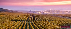 Misty sunrise over vineyards in autumn, Oger, Champagne, France
