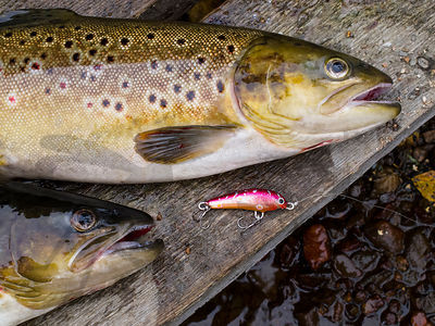 Brown Trouts And Handmade Wobbler