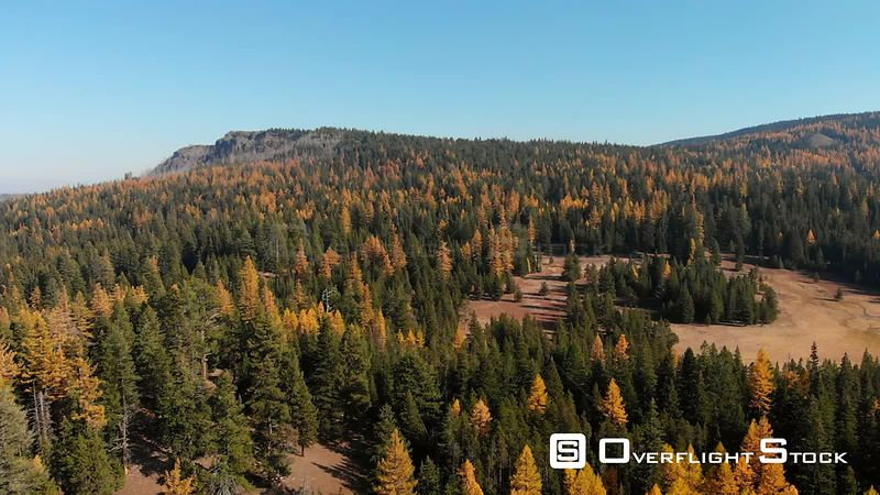 Autumn Larch and Aspen Trees Ochoco National Forest Oregon USA