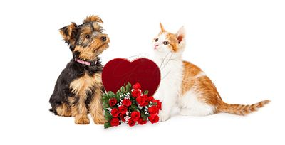 Puppy and Kitten Celebrating Valentines Day