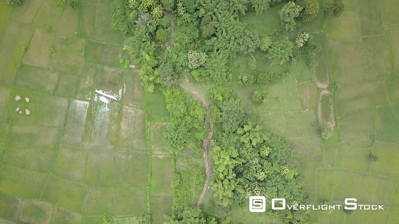 Aerial view of rice paddies at Don Daeng Island, nearby Champassak town, filmed by drone, Laos