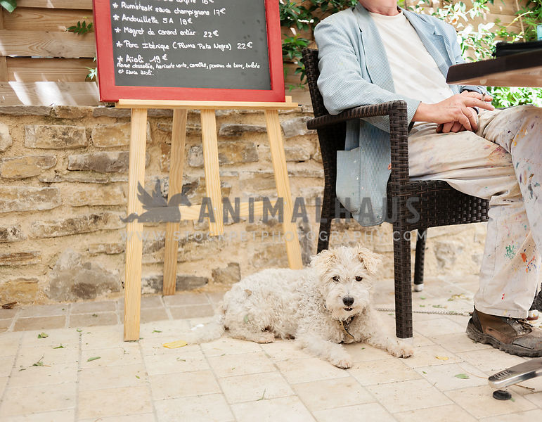 Pet-Friendly Businesses photos