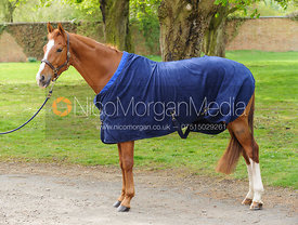 Horse in a rug
