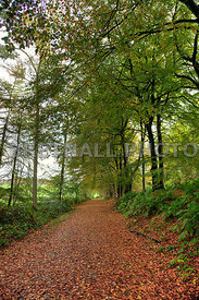 King's Gate in Autumn, Delamere Forest, Kelsall, Cheshire
