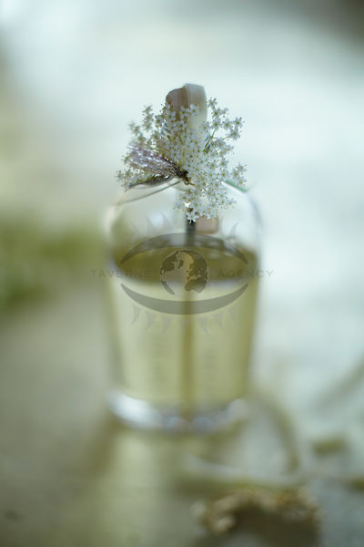 Elderflower Photos