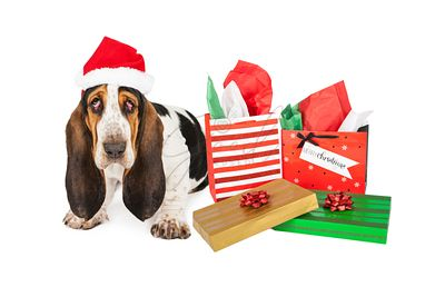 Tired Basset Santa With Gifts