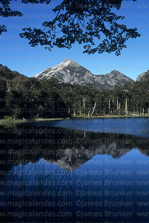 Reflections in Lake Pehuen, Huerquehue National Park, Region IX, Chile