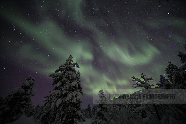 Patches of Aurora above the forest