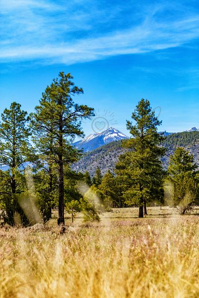 Flagstaff Arizona Park in Woods - Vertical