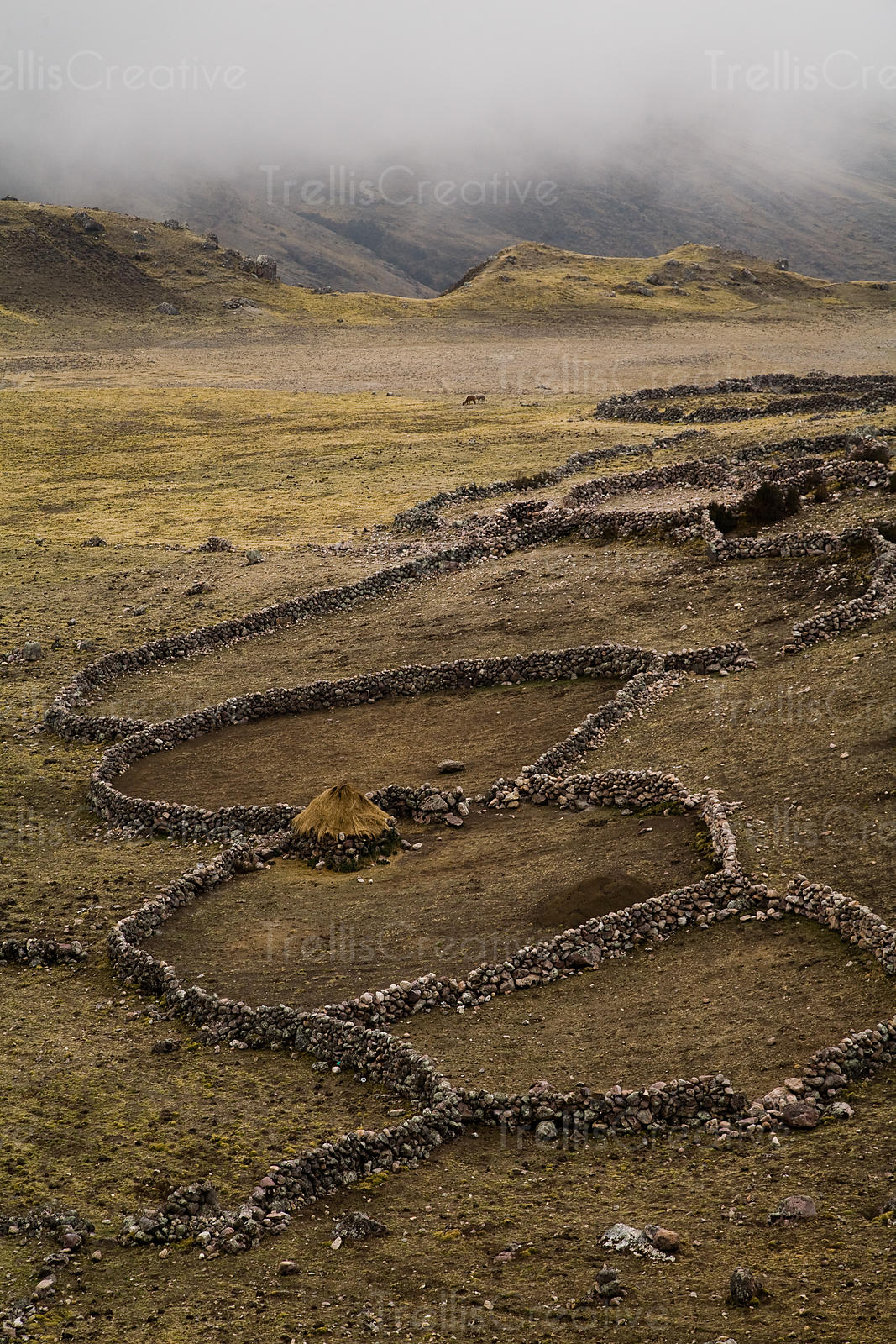 The stone wall rings provide protection from predators when nomadic herders need to rest overnight, Lares Trek, Andes Mountains, Peru