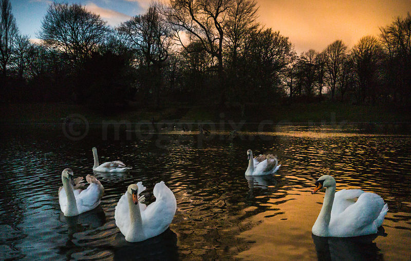 Image Gallery: Sefton Park Lake photos