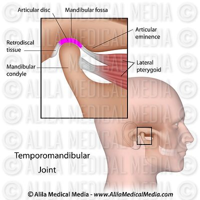 Temporomandibular joint labeled