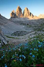 Blue flowers and the three peaks in summer Dolomites Italy