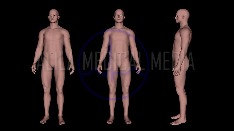 General Anatomy and Body Shape Videos video clips
