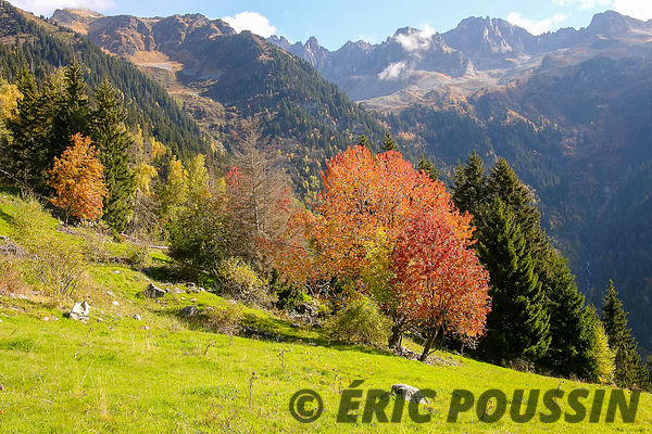 AUTOMNE photos