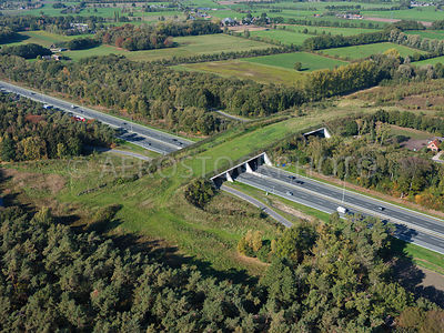 305333 | Ecoduct Mollebos is an ecopasssage or wildlife viaduct over the A12 near Austerlitz.