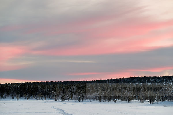 Pink sky in the north