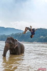 Mahout jumping off elephant in the Mekong river, Laos