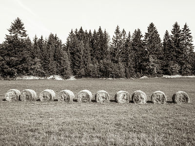 Haystack Rolls on Grass Field, Trees and sky, Jura, Fance