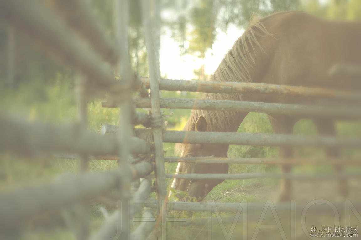 Horse and old wood fence