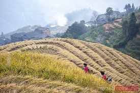 Yao ethnic minority women on rice terrace