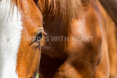 Closeup Horse Eye With Copy Space
