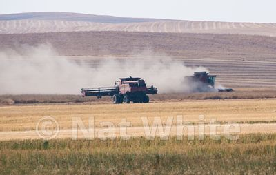 Palouse_lentil_harvest-_DSC9285-September_09_2017