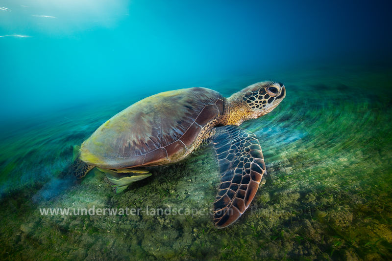 Long exposure with Green Turtle