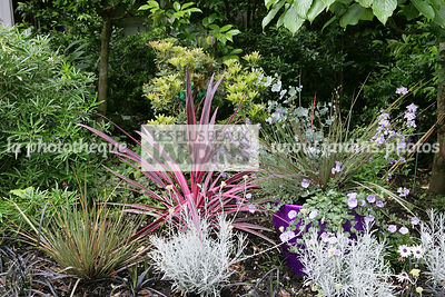 Massif. Helichrysum apiculatum 'Korma', Libertia ixioides 'Taupo Blaze', Cordyline 'Pink Passion', Jardin MAP