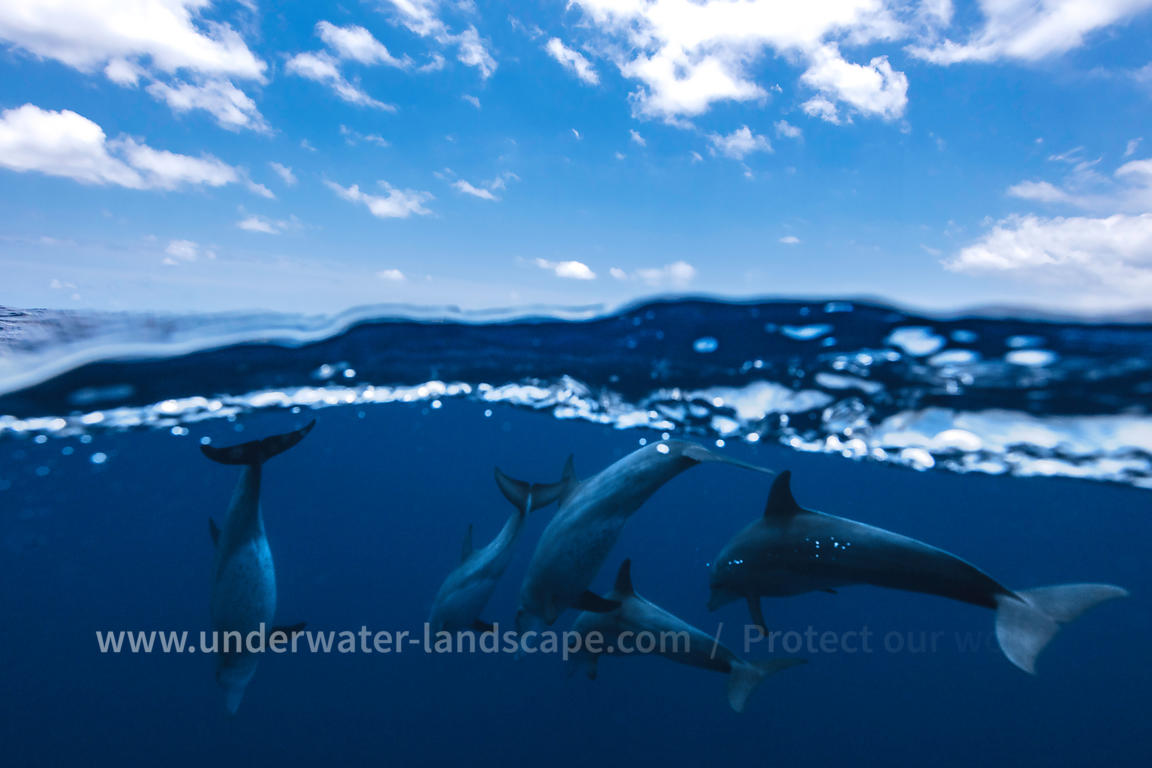 Dolphins over the surface in Mayotte