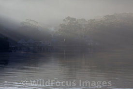 Risby Cove in the morning fog, Macquarie Harbour, Tasmania, Australia; Landscape