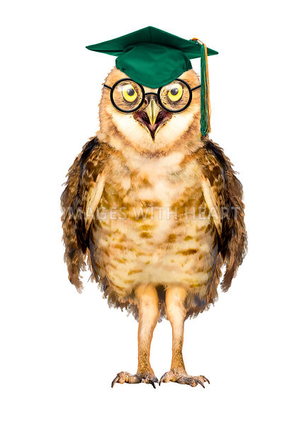 Smart Owl Wearing Glasses and Graduation Cap