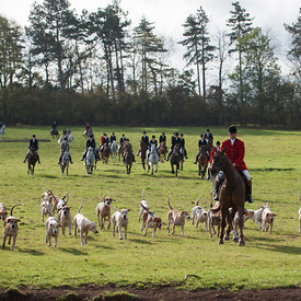 Grove and Rufford Hunt at Caunton 25/10 photos