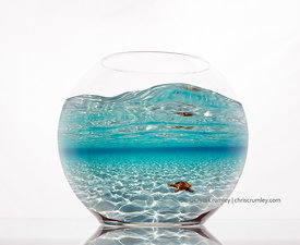 Composite of glass fishbowl with picture of sea star in shallow water