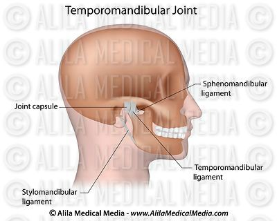 Ligaments of the temporomandibular joint (TMJ) labeled.