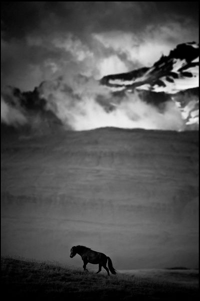 Wild horse of Iceland walking in the plain, 2015 © Laurent Baheux