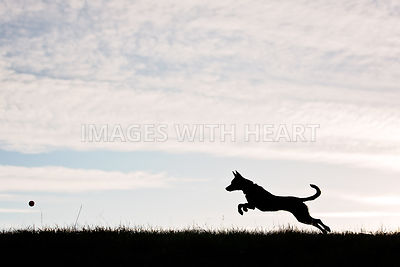 Silhouette of dog chasing ball