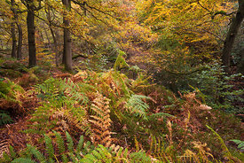 Padley Wood autumnal colours