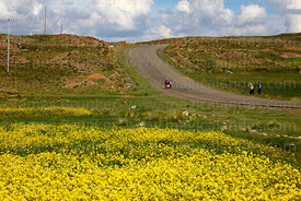 Locals walkign along road and rapeseed (Brassica napus) plants growing on altiplano, Bolivia