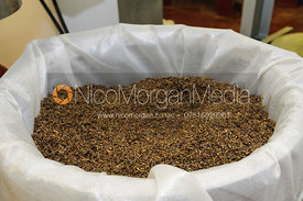 Having soaked for several weeks the shredded echinacea root is prepared for pressing