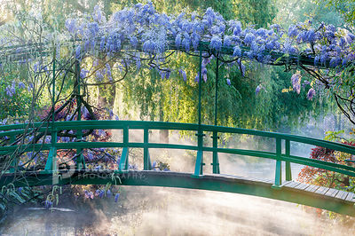 Claude Monet's garden, Giverny photos